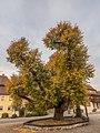 Untersteinbach Linde 125095.jpg