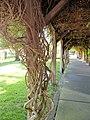 V Sattui Winery, St. Helena, California, USA (5967911795).jpg