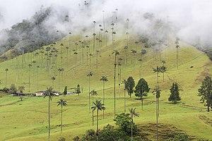 Valle de Cocora, Colombia 02.jpg