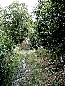 Valley track - Hadleigh Great Wood - geograph.org.uk - 291131.jpg