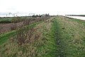 View north-east along the Fen Rivers Walk - geograph.org.uk - 1618577.jpg