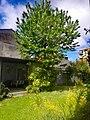 Vigevano, chiesa del SS. Crocifisso o Cristo della Resega - il giardino attiguo di pertinenza1.jpg