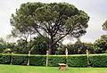 Villa di geggiano, giardino 22.JPG