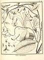 Viola hybanthus Aublet 1775 pl 319.jpg