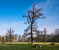 Vitoria - Parque de Olarizu - Roble 01.jpg