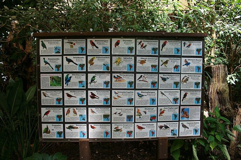 File:Vogelpark Walsrode 40 ies.jpg