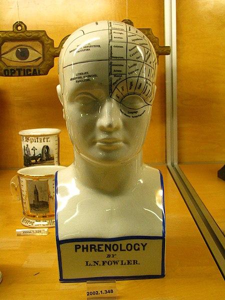File:WLA nyhistorical Lorenzo Niles Fowler Phrenology head.jpg