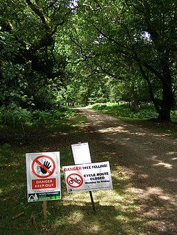 Warning signs on Beechen Lane, New Forest - geograph.org.uk - 210784