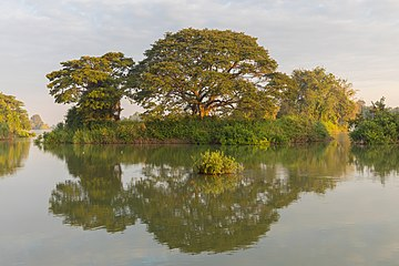 Water reflection of a green island at golden hour in Don Det Laos.jpg