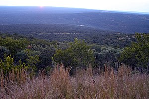 Bushveld - Bushveld in the Waterberg Biosphere.