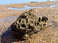 Wellington Point Island Dead Coral -2 (9754747956).jpg