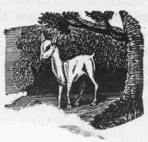Quintus Sertorius - Image: White Fawn Drawing