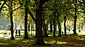 Whitworth Park from next to Whitworth Gallery, Moss Side, Manchester - panoramio.jpg