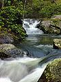 Wild Creek Falls (3).jpg