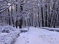 Winter-spb.JPG