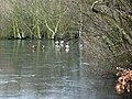 Winter - Stanley Marsh Nature Reserve (4) - geograph.org.uk - 1704986.jpg