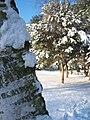 Winter 2010 - panoramio.jpg