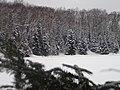 Winter 2013-2014 - Turtle Cove on Bentley Lake Walking on water. - panoramio.jpg