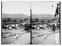 Women and men with cattle near well LOC matpc.10561.jpg
