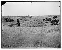 Women working in field. LOC matpc.06857.jpg