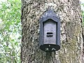 Woodcrete bat box at Carstramont Wood - geograph.org.uk - 1429057.jpg