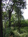 Wooded edges of the prairie P7300004.JPG