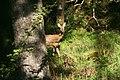Woodland, Taynish Peninsula - geograph.org.uk - 454118.jpg