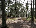 Woodland at Helen's Tower - geograph.org.uk - 754859.jpg