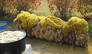 Reseda luteola - Image: Wool Dyed with Reseda. (1)