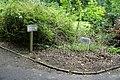 Wuppertal - Waldfriedhof Krummacherstraße 02 ies.jpg