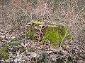 Wuppertal Barmer Wald 0017.jpg