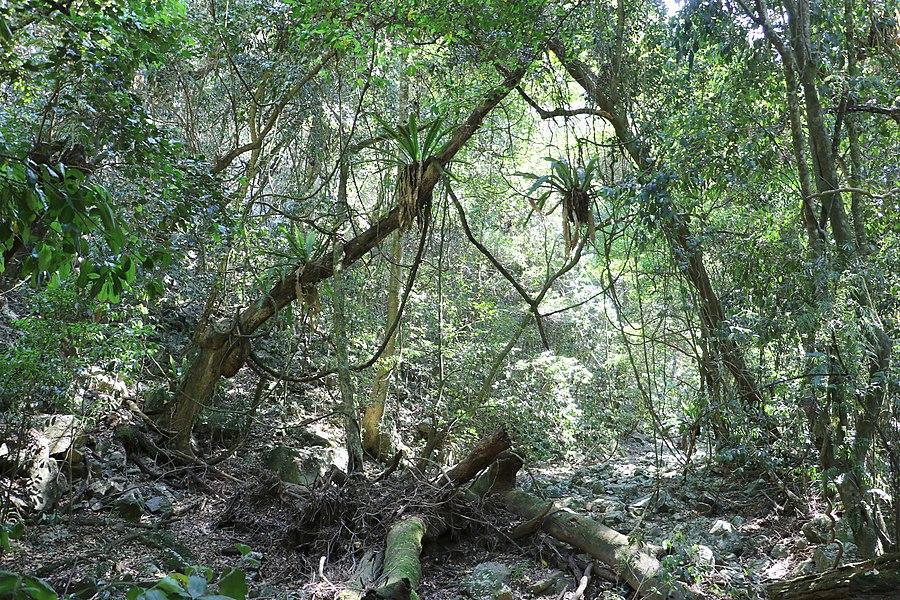 Yatteyattah Nature Reserve