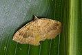 Yellow shell (36804188365).jpg