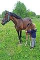 Young boy with horses, Ausmas ecological farm, Latvia.JPG