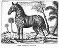 ZebraLudolphus.jpg