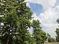 Zemo Khodasheni-Alaverdi-Kvemo Alvani, Georgia - panoramio (15).jpg