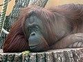 Zoo z02.jpg