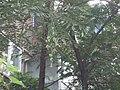 Thumbnail for version as of 03:02, 6 September 2005