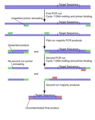 File Nested PCR png Wikimedia Commons