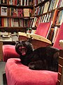 """Kitty"" at Shakespeare Books.jpg"