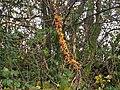'Nature's Necklace', Trenewydd Lane, Llanteg - geograph.org.uk - 1048184.jpg