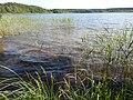 +20180611Müritz-Nationalpark.Feisneck See.-022.jpg
