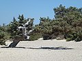 Λυγισμένο δέντρο στη Χρυσή - Bent tree on Chrysi.jpg