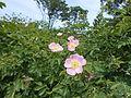 Ботанічний сад ДНУ 31.JPG