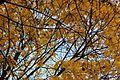 Восень - panoramio (1).jpg