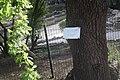Дендрарій Київського зоопарку (масив дерев) IMG 3446.jpg
