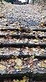 Каменная лестница.Вики-встреча 24.10.2020 02.jpg