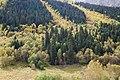 Карачаево-Черкесия, Западный Кавказ, Софийская долина, хвойный лес на склонах, Karachay-Cherkessia, Caucasus Mountains.jpg