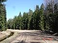 Лесная дорога le chemin de forêt meža ceļš - panoramio - Aleksandrs Timofejev… (10).jpg