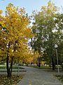 Листопад - panoramio (4).jpg